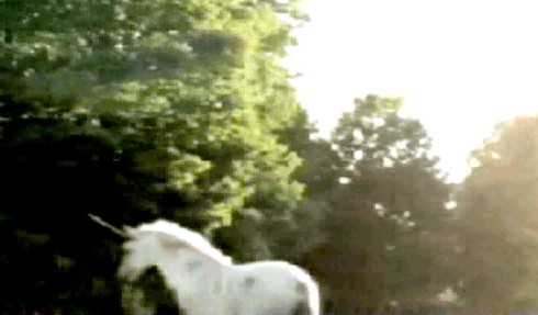 Unicorn_682_1146259a